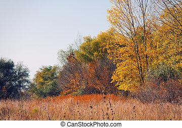 łąka, rano, autumn las, krajobraz, spokój
