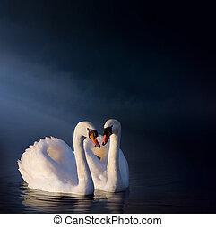 łabędź, para, sztuka, romantyk