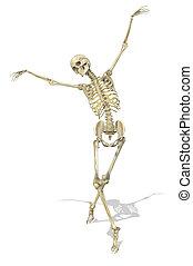 łania, poza, szkielet, doprowadzenia