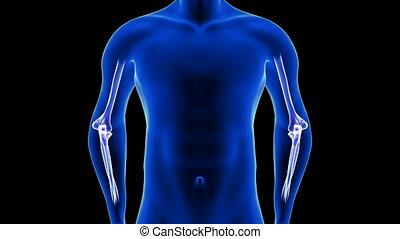 łokieć, -, ludzki, ból, ciało, prospekt, przód, czarnoskóry, animacyjne tło, 3d, anatomia, render, seamless, close-up., pętla, skandować, błękitny