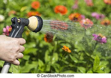 łzawienie, kwiat ogród