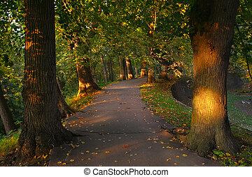 ścieżka, las, drzewa, między
