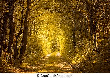 ścieżka, las, złoty