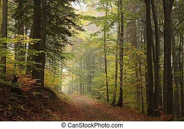 ścieżka, przez, jesienny, las