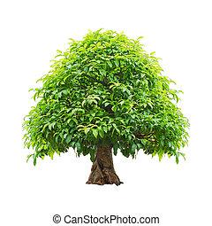 ścieżki, strzyżenie, drzewo, odizolowany, tło., included, biały
