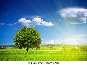 środowisko, zielony, natura