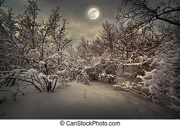światło księżyca, drewno, zima, noc