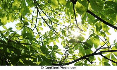 światło słoneczne