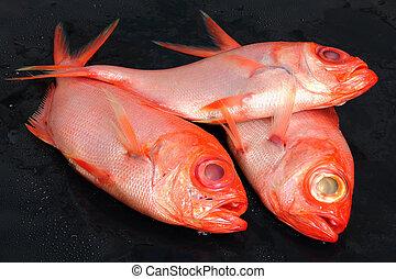 świeża ryba, surowy