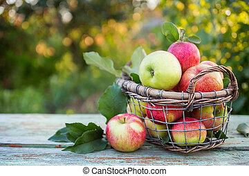 świeży, basket., jabłka, dojrzały