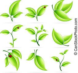 świeży, liście, komplet, zielony, ikona
