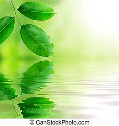 świeży, liście, zielone tło