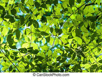 świeży, liście, zielony las