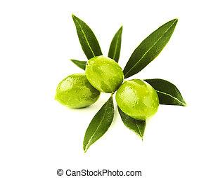 świeży, oliwki, zielony, gałąź