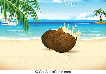 świeży, orzech kokosowy, plaża, morze