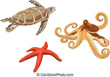 żółw, ośmiornica, rozgwiazda