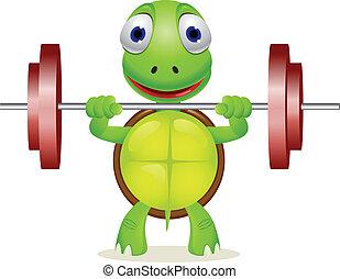 żółw, zabawny, dźwig, barbell