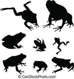 żaby, sylwetka