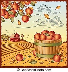 żniwa, jabłko, krajobraz