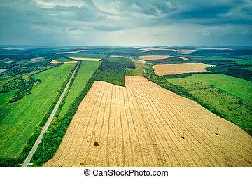 żniwa, zielony, przed, pola, lato, prospekt, antena