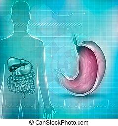 żołądek, normalny, dół, kardiogram, sekcja, krzyż, anatomia, okoliczny, tło, technologia, abstrakcyjny, organy