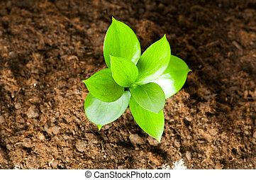 życie, pojęcie, sadzonka, gleba, -, zielony, rozwój, nowy, poza