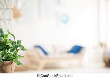 żyjący, roślina, pokój