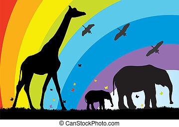 żyrafa, afryka, słonie