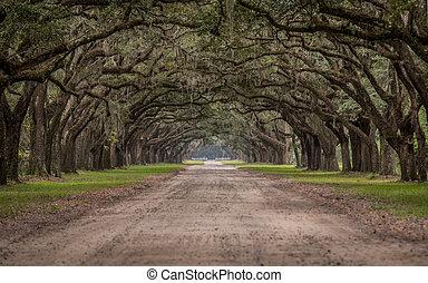 żywy, przez, dąb, tunel, droga, drzewa, brud