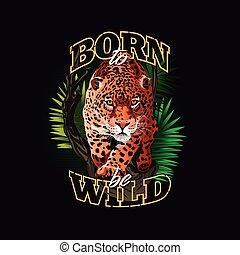 -, jaguar, urodzony, dziki, czuć się