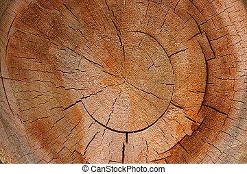 -, sekcja, drzewo, krzyż, wzrostowe kolisko, okólnik