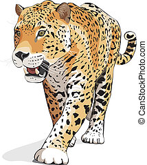 -, wektor, jaguar, odizolowany, biały