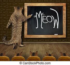2, meow, nauczyciel, pisał, kot