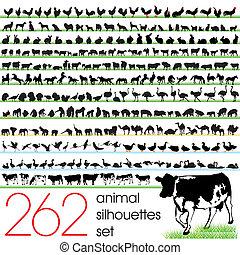 262, sylwetka, komplet, zwierzę