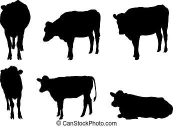 6, sylwetka, krowa