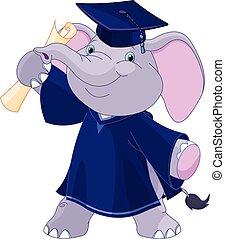 absolwenci, słoń