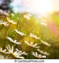 abstrakcyjny, trawa, tło, lato, sztuka, kwiat, natura