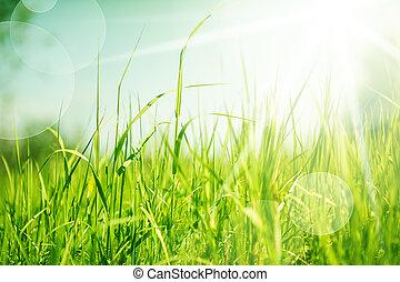 abstrakcyjny, trawa, tło, natura