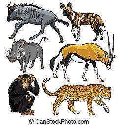 afryka, komplet, zwierzęta