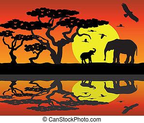 afryka, słonie