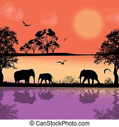 afryka, słonie, sylwetka