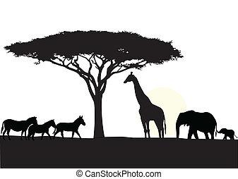 afryka, tło, sylwetka