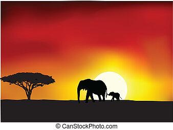 afryka, zachód słońca