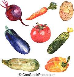 akwarela, warzywa, komplet