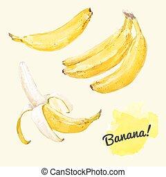 akwarela, wektor, komplet, banany