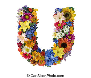 alfabet, kwiat, -, u