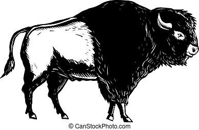 american-buffalo-bison-side-wc-bw