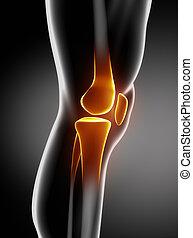 anatomia, kolano, boczny, ludzki, prospekt