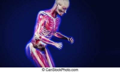 anatomia, pasaż