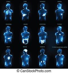 anatomia, pojęcie, ludzki